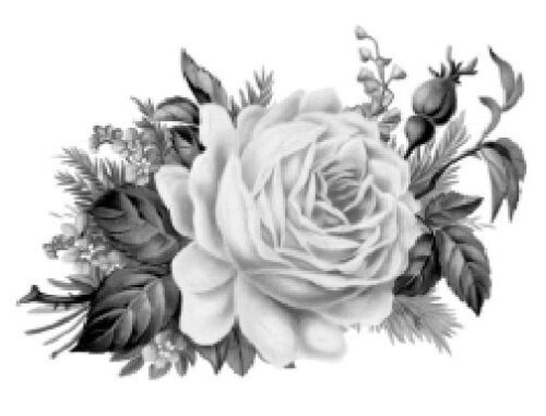 Vintage Image Black White Cabbage Rose Furniture Transfers Decoupage Decal FL528