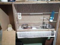 Cockateil breeding cage