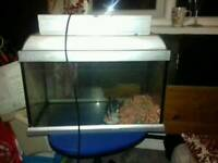 Cheap fish tank