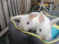 2 lop does available