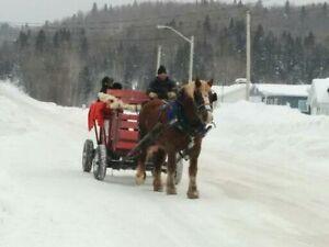 Pour une activité qui sort de l'ordinaire Saguenay Saguenay-Lac-Saint-Jean image 3
