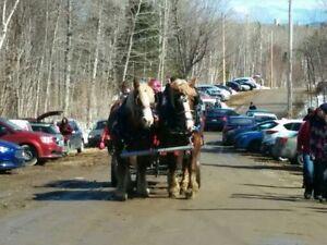 Pour une activité qui sort de l'ordinaire Saguenay Saguenay-Lac-Saint-Jean image 8