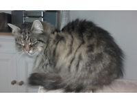 Fluffy cat seeks forever home