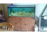 Fish tank, fish, all accessories