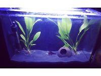 Fluval Spec 19L Tropical Aquarium