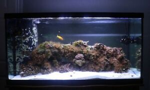 SALT WATER Aquarium 90gallons with 30gallons sump for sale