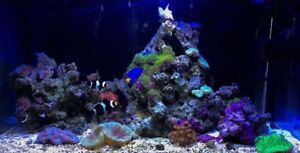 30 gallon Saltwater Tank for $500