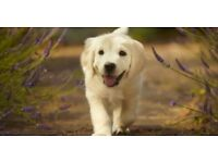 Dog Walking Services in Dollingstown/Lurgan & Moira areas