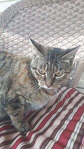 Beautiful Cats & Kittens - Fixed, Vaccinated & Microchipped! Edmonton Edmonton Area image 10