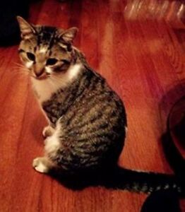 KLAWS: Missing Dec 4th, Lindsay St S/Logie St intact young male