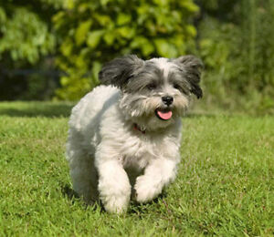 Amazing Online Business Opportunity for Dog Lovers