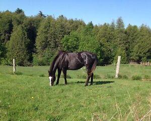 Horse Boarding Peterborough Peterborough Area image 1