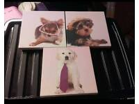 Set of 3 animal canvases