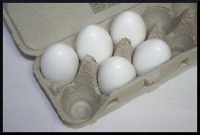 White Eggs, Wood Eggs, Easter Eggs, Chicken Eggs, Decor Eggs, Pretend Play (White Easter Eggs)