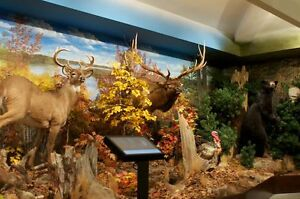 Hunting and Fishing Heritage Centre! Peterborough Peterborough Area image 1