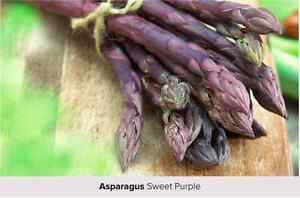 Sweet Purple Asparagus Plants
