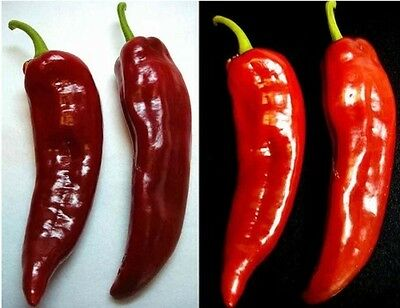 - Pepper, Anaheim Chili Heirloom Non-GMO Seeds