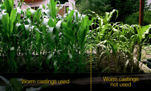 Worm Castings - Vermi Compost - Fishing Worms