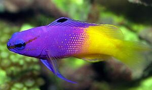 SALTWATER FISH AND CORAL SALE