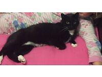 Maisy the cat