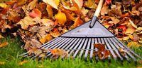 Residential Leaf Clean Up Raking