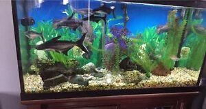 Fish & 90 Gal Aquarium (make an offer)