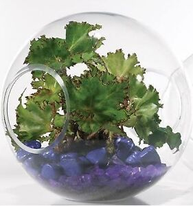 Double-opened glass globe - clear