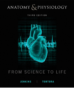Anatomy & Physiology Seaford Frankston Area Preview