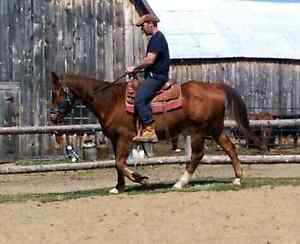 Looking for nice, quiet trail horse?