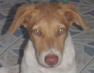 GingerLee Spunky Rescue Pupavailable for adoption
