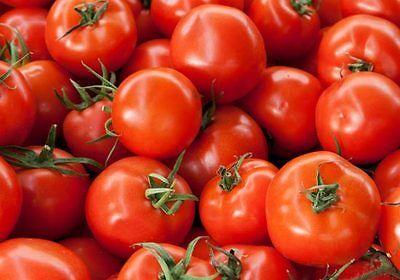 BUSH EARLY GIRL HYBRID TOMATO SEEDS * BUSH TYPE PLANT 18 INCHE**** BULK 50 SEEDS