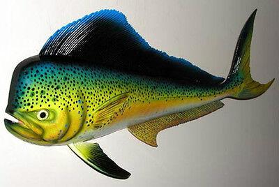 "Dolphin Mahi Mahi Dorado Fish Mount 18"" X 8  New Wall Plaque Replica"