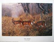 Wildlife Art News
