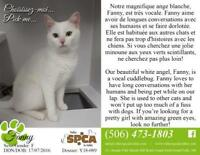 "Adult Female Cat - Domestic Short Hair: ""Fanny"""