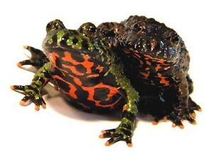 Fire Belly Toads