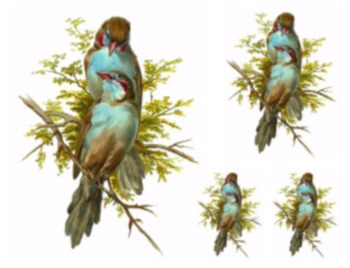 Vintage Image Victorian Blue Birds Tree Branch Furniture Transfers Decals BIR848