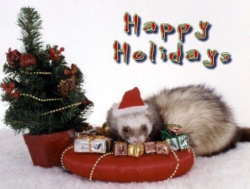 Pet Christmas Cards:Ferret Xmas
