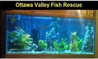Ottawa Valley Fish Rescue