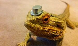 Wanted: bearded dragon and accessories