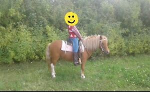 4 YEAR OLD CHRISTMAS PONY
