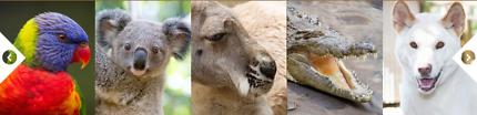Wildlife Currumbin Sanctuary Ticket FOR SALE ONLY $10!!!