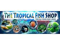 The Tropical Fish Shop Sheffield