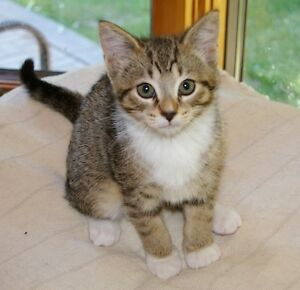 Cute Kittens FREE to a Loving Home