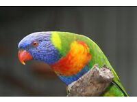 Parrot Hand reared and talking