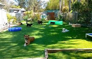 DOG DAY CARE DOG WALKING with Pet Buddy Blackalls Park Lake Macquarie Area Preview