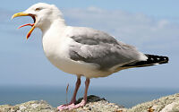 Do you have a Seagull problem?