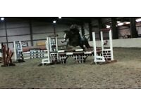 138 Superstar Pony for Sale