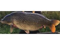 Carp fishing tackle wanted