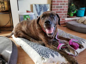 Dog Day Care, Sitting, In home Visits & Boarding Near High Park