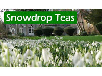 Snowdrop Teas Open Days
